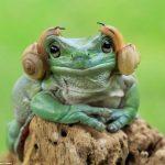 【画像】スターウォーズのレイア姫みたいなカエルが発見されるwwwwwwwwwwwww