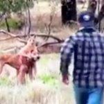 【動画】カンガルーに愛犬を襲われた男、カンガルーにパンチ!←これwwwwwwwww