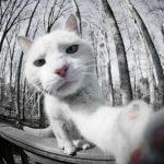 【画像】可愛くて仕方がない、自撮りをする動物の画像を集めたwwwwww