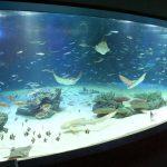 【悲報】サンシャイン水族館、9割の魚を死なせるwwwwwww