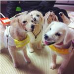 【画像】毛糸の犬のクオリティがスゴイと話題にwwwwwww