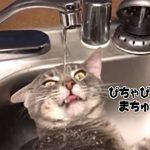 【画像】この水の飲み方が明らかにおかしい猫が面白すぎるwwwww