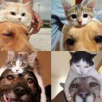 【画像】新ジャンル「頭に猫をかぶった犬」。その写真が可愛すぎるwwwwww