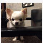 【画像】大杉漣さんブログ、急逝後初更新・・・愛犬&愛猫「私たちは元気に仲良くやってるニャン」