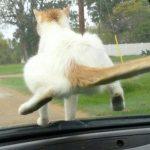 【画像】悪意の見え隠れする猫たちのイタズラ画像を貼ってくwwwww