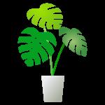 【悲報】「観葉植物栽培」の初心者がしやすい失敗がこちらwwwwww