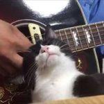 【画像】これは逆らえない ギターをひく人の手元でナデナデをおねだりするかわいすぎるネコちゃんwww
