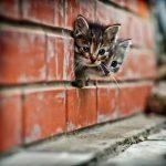 「猫ブームは困る」1000匹以上の猫を保護するNPOの女性、行動力と説得力がネットで話題に・・・