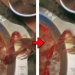 【GIF】しゃぶしゃぶに投入されたザリガニ、危機を察して自ら腕を切って脱出するwwwwwwww