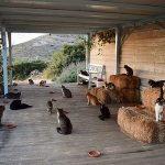 【朗報】エーゲ海の島で猫55匹の世話するアルバイトに応募殺到wwwwwww