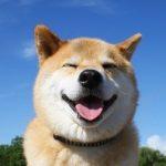 【画像】動物の喜怒哀楽がわかる画像を貼ってくwwwww