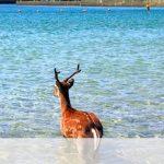 【画像】海にとんでもないお客さんが来てしまった結果wwwww