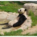 【画像】癒される!くつろいでいる動物たちの画像を貼ってくスレ。