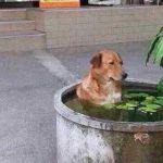 【画像】イッヌ、人目も気にせず入浴してしまうwwwwwwwww