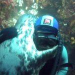 【動画】ダイバーと一緒に泳いだアザラシ、海に潜るとすぐに近づいてきて熱烈なハグwwwwwww