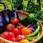 松本人志「果物と野菜の違い」が大絶賛…