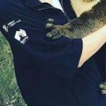 【戦慄】香里奈が抱くコアラに衝撃走る!!!!!