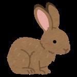 【画像】ロリついたウサギさん(15)がコチラwwwwwwwwwwww