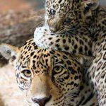 かっこいい動物の画像貼ってけwwwwwwwwwwwwwwwwwwwwwwwwwwwwwwwwwwwwwwwwwwwwwwww