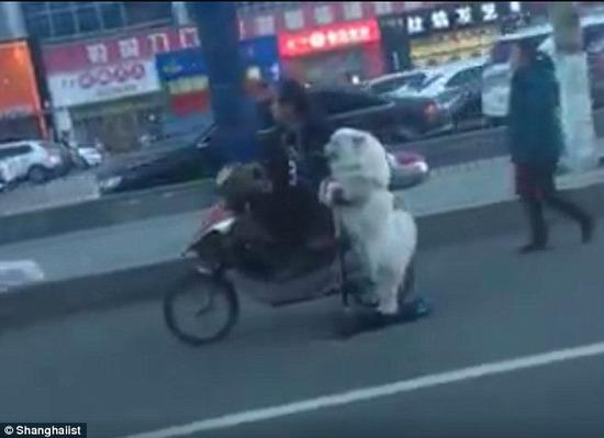 【画像】中国の犬の散歩が斬新過ぎると話題にwwwwwwwwwww