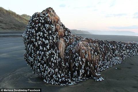 【速報】ニュージーランド海岸にやばい何かが流れ着く (※画像あり)