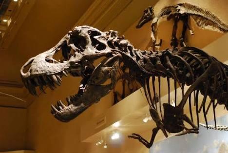 ティラノサウルスの腕wwwwwwwwwwwwww